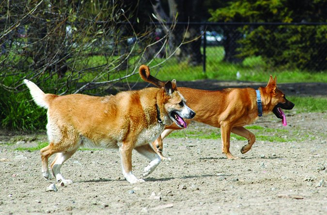 active arthritic dogs