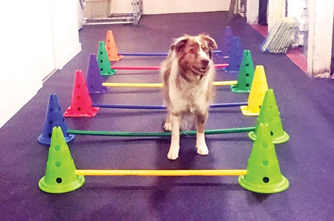 exercises for old dogs