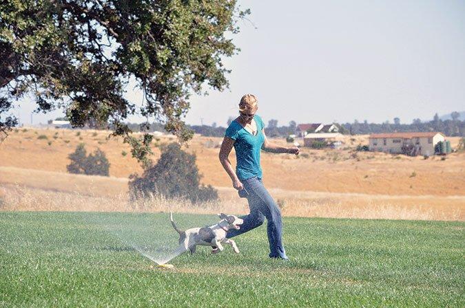 fun dog training