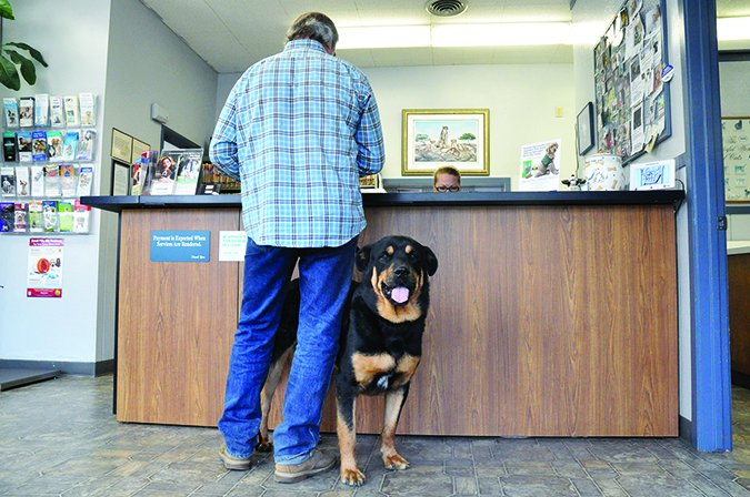 veterinarian visits