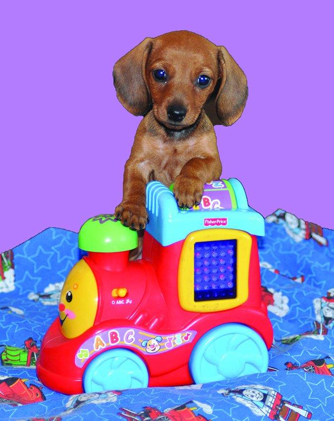 puppymill puppy