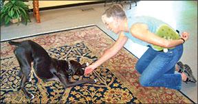 dog trainer teaching trick