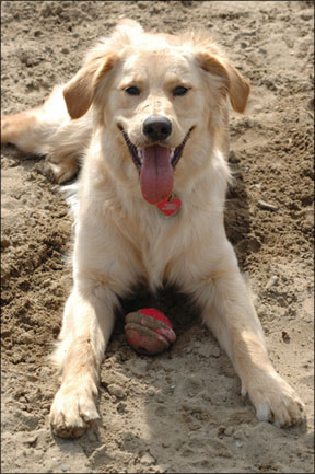 Canine Exercise Tips