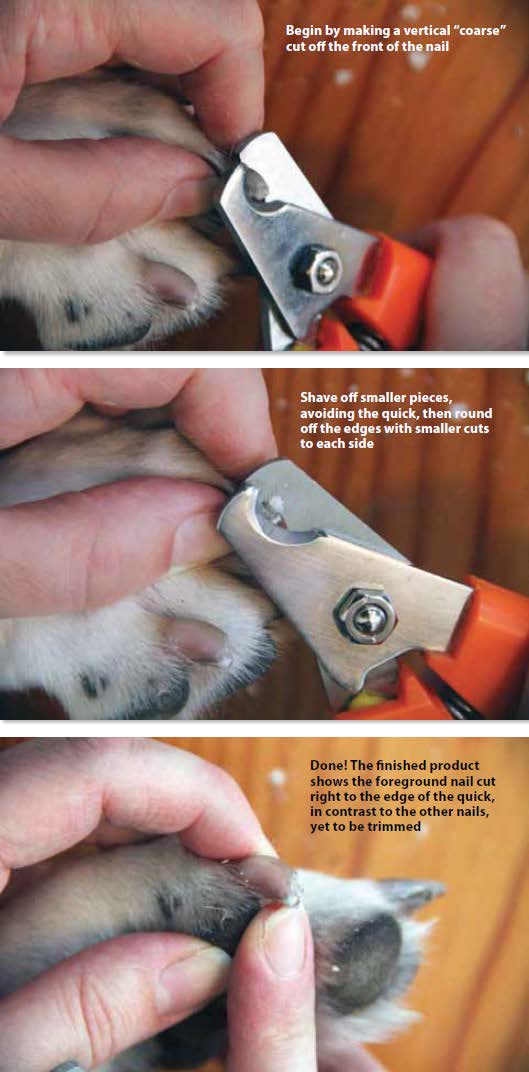 ToeGrips dog nail clippers