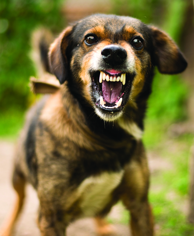What Causes Aggressive Dog Behavior