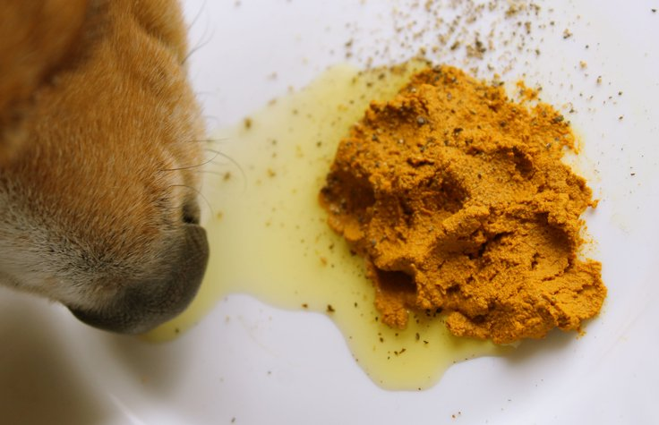 Turmeric Golden Paste Dog Supplement