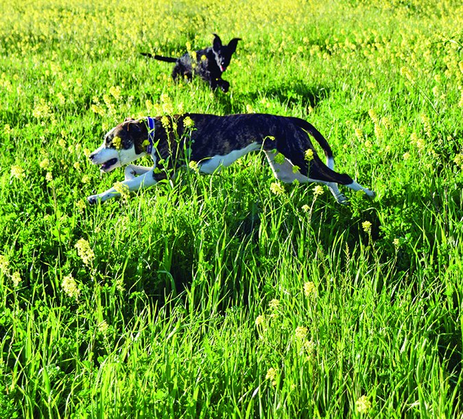 Dog Stung By A Bee? Here's How to Treat It - Whole Dog Journal