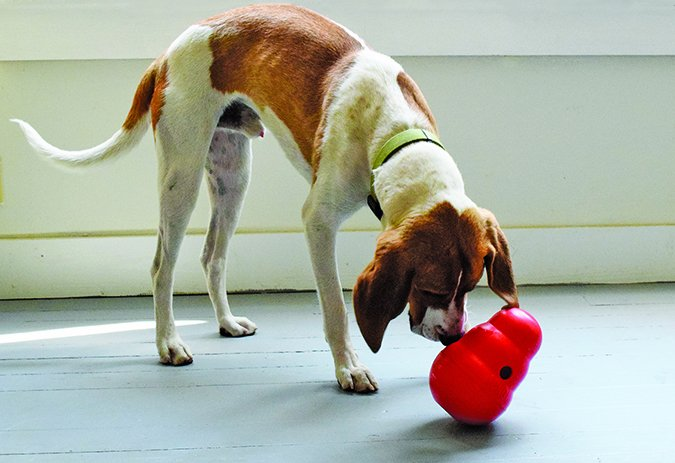 The Best Food-Dispensing Toys 2019 - Whole Dog Journal
