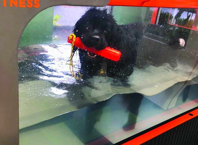 underwater treadmill physical therapy for dogs