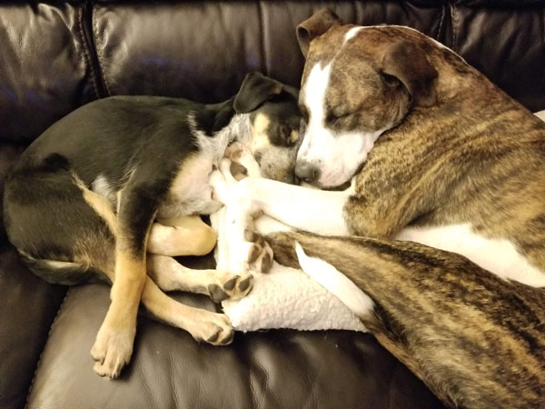 two dogs cuddling together on couch