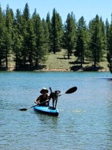 Odin kayaking on a lake