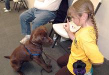 Puppy in class