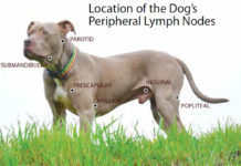 Best Treatment Options for Canine Lipomas - Whole Dog Journal