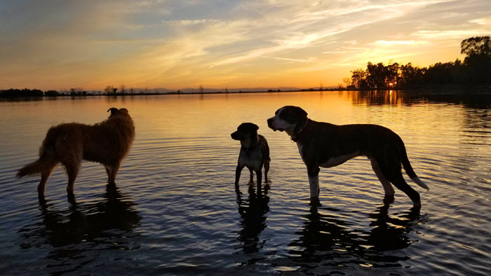 dogs standing in lake water