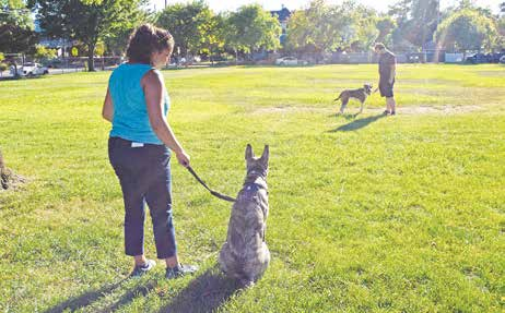 Frustrated On Leash?