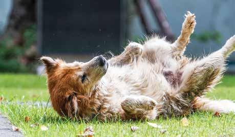 Canine Seizures Whole Dog Journal