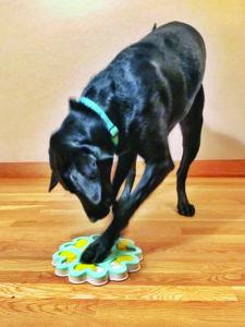 Reforming a Reactive Dog