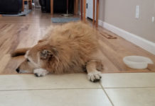 Update On Grain Free Diets And Dcm Cases In Dogs Whole Dog