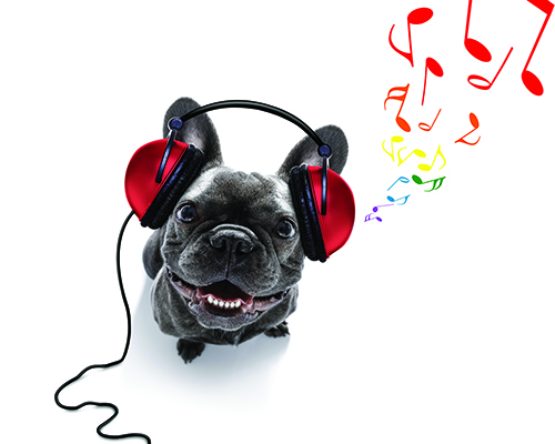 Audio Products for Sound Conditioning Your Dog
