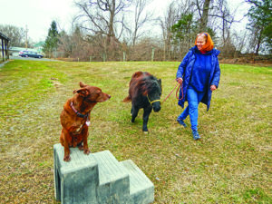 Life at Peaceable Paws