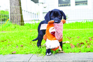 Give Your Puppy a Smart Start