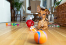 indoor dog games