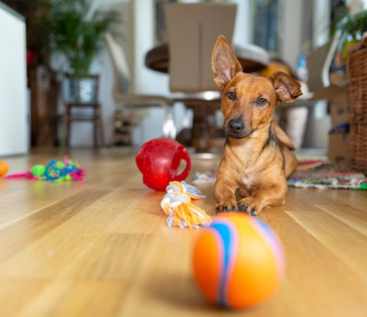 indoor dog games