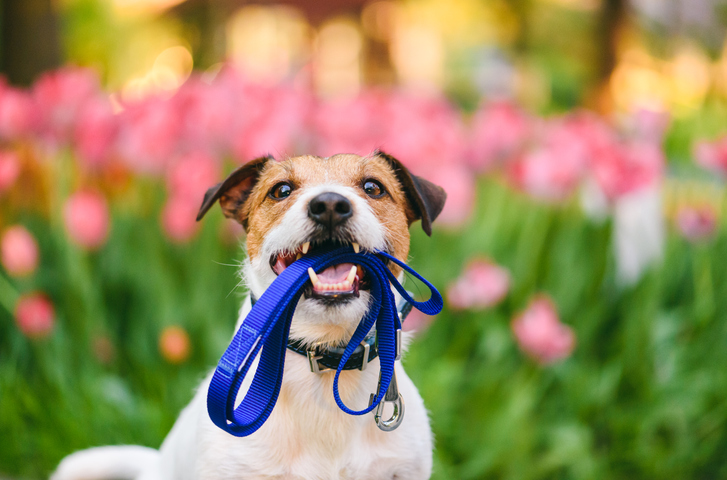 Walking Your Dog Course