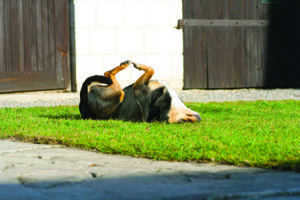 Why Do Dogs Roll in Stinky Things?! And What Can You Do About It?