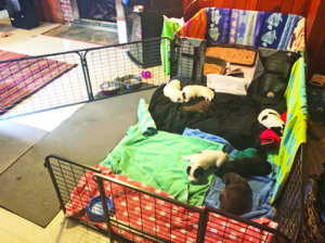 What Fostering Can Do For Rescue Puppies