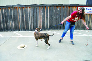 Counter Productive: How to Keep Your Dog From Stealing Unattended Food and Other Edible Items