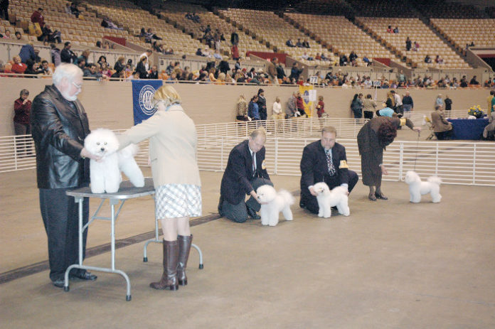 Breeding Dogs for Health, Not Looks - Whole Dog Journal