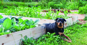 Five Ways to Make Your Dog's Yard Safe and Fun