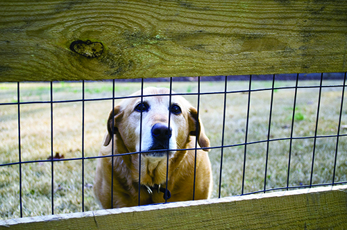 Five Ways to Make Your Dog's Yard Safe and Fun – Whole Dog Journal