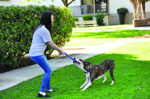 Be a Change Agent! – Whole Dog Journal