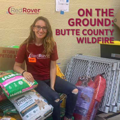 Rescue Workers From Across the Country Join the California Wildfire Animal Rescue Efforts