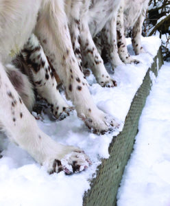 Maintaining and Protecting Your Dog's Paws During Winter