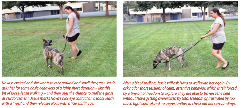 Positive Reinforcement Training Without Treats