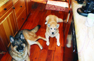 """""""Quarantrain"""" Your Dog: How to Train Your Dog While Staying Home"""