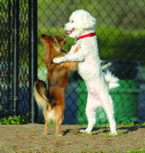 How to Safely Introduce Your Dog to Other Dogs