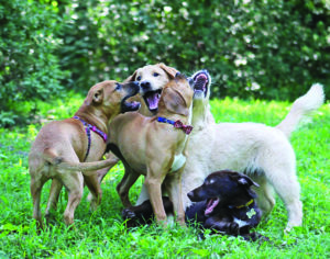 Infection vs. Isolation Risks with Your Puppy