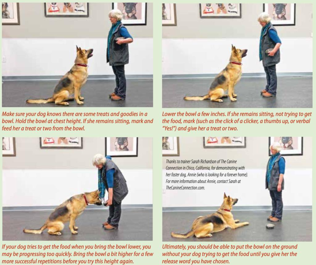 Dog House Rules