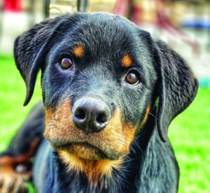 To Buy or Adopt a Dog? What You Should Know