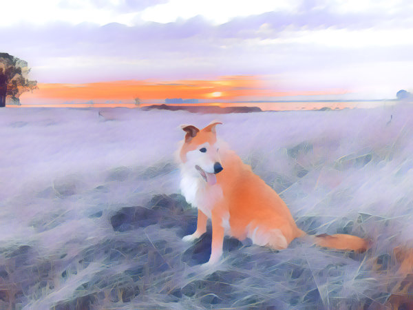 Prisma – A Fun App for Dog Owners