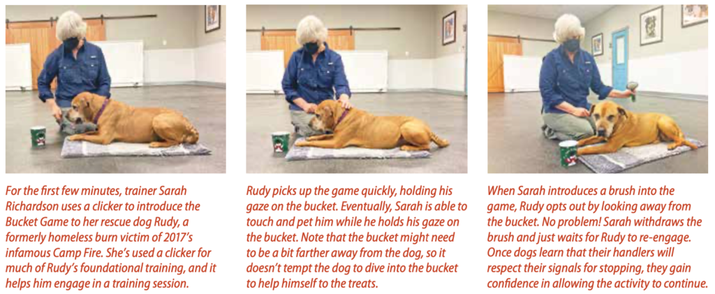 Cooperative Care: Giving Your Dog Choice and Control