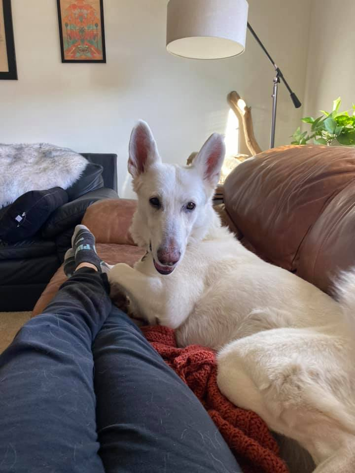 Lost Dogs – How You Can Help