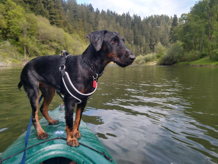Finding the Perfect Dog For Friends and Family
