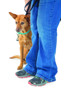 Recognizing Dog Stress While Adjusting to a New Home