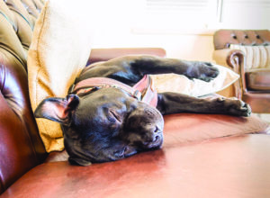5 Simple Steps to Improve Your Dog's Quality of Life