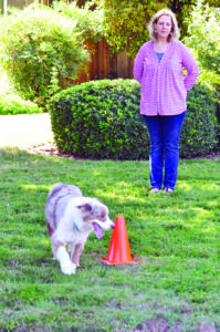 How to Engage Your Dog's Brain When Activity is Restricted